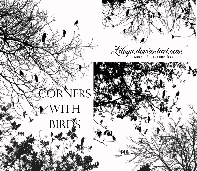 Corners with Birds Photoshop brush
