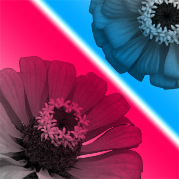 Summer Flower Brush Set Photoshop brush