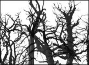 Dead Trees Photoshop brush
