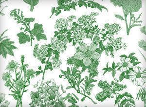 Flora Brushes 1 Photoshop brush