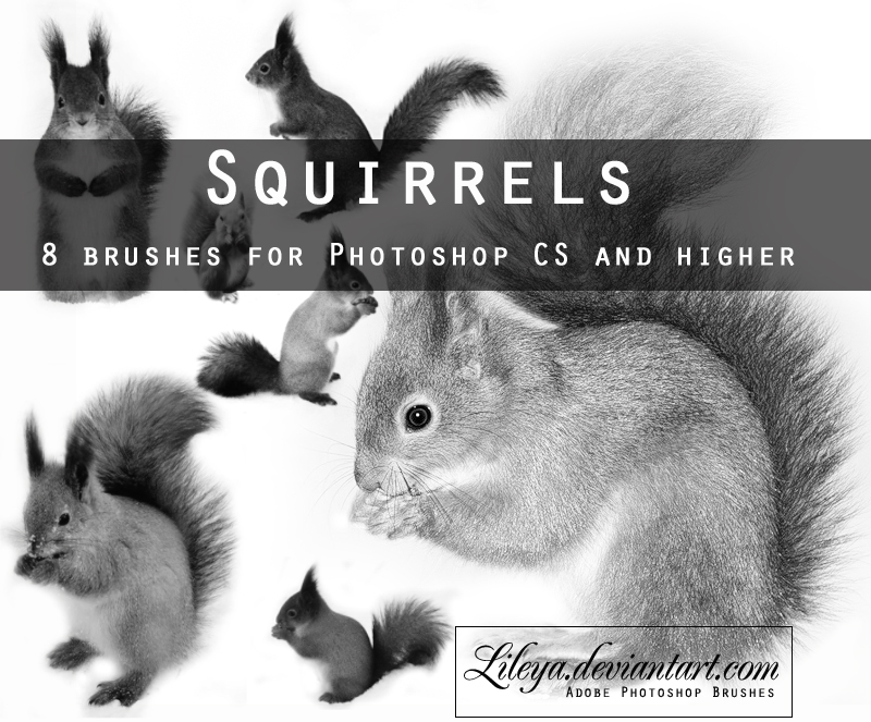 Squirrels Brushes Photoshop brush