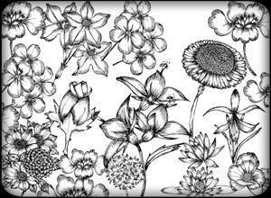 Hand Drawn Flowers Free Brush Pack Photoshop brush