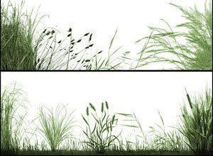 The Grasslands Photoshop brush