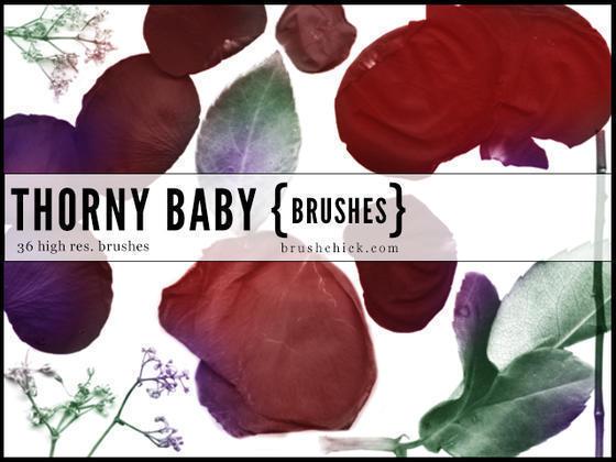 Thorny Baby Rose Brushes  Photoshop brush
