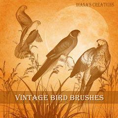 Vintage Bird Brushes Photoshop brush