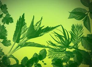 32 Ultra Photoshop Quality Leaf Brushes Photoshop brush