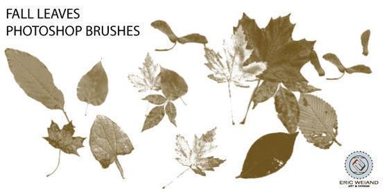 Fall Leaves Brushes Photoshop brush