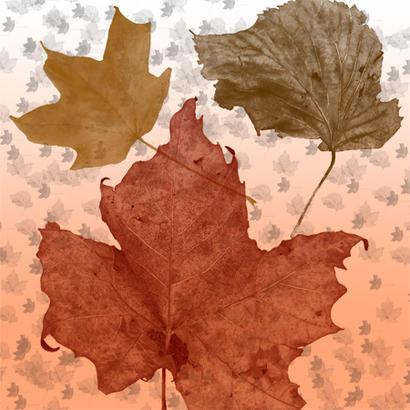 Fall Leaves Brush Pack Photoshop brush