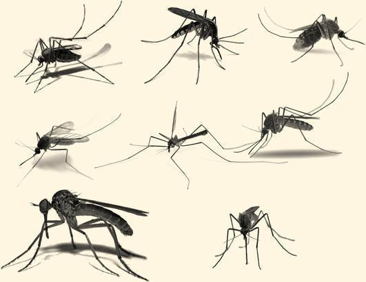 Mosquito Brushes  Photoshop brush