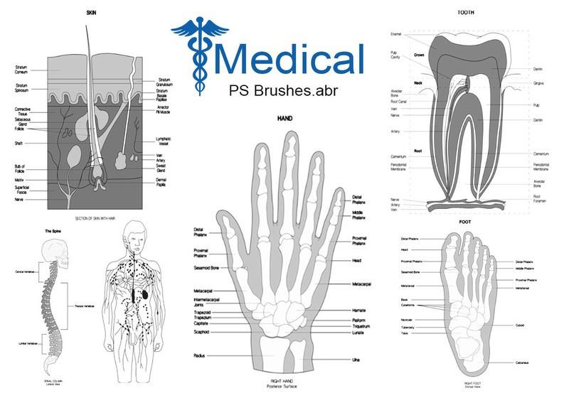 20 Medical PS Brushes.abr  Photoshop brush