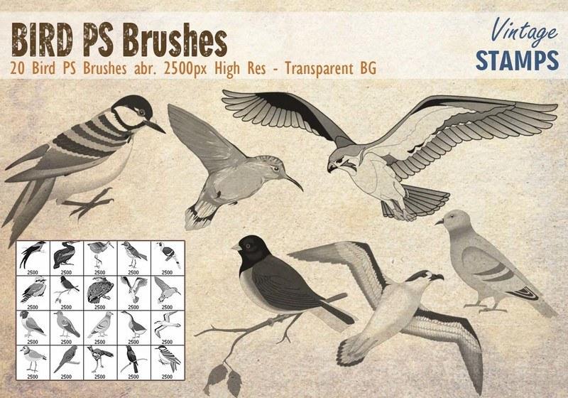 Bird PS Brushes Photoshop brush