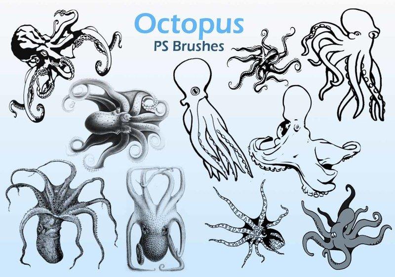 20 Octopus  PS Brushes abr. Photoshop brush