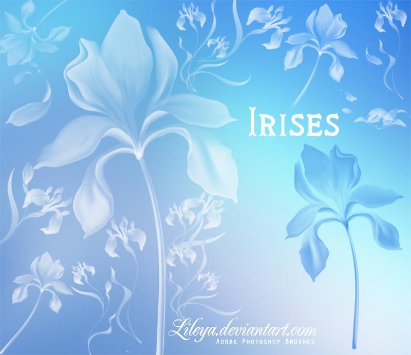 Irises Photoshop brush