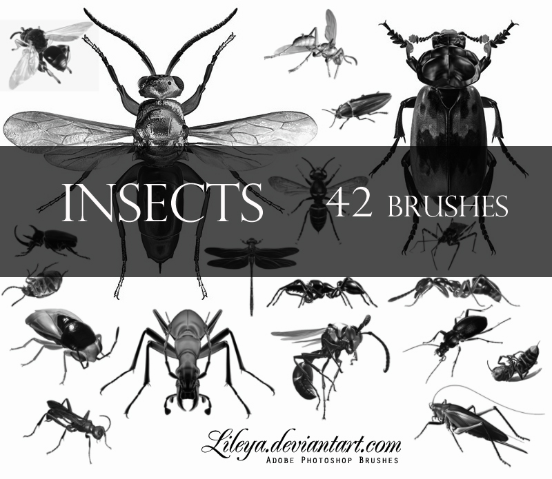 Insects Photoshop brush