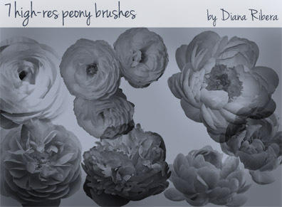 Peony Brush Pack  Photoshop brush