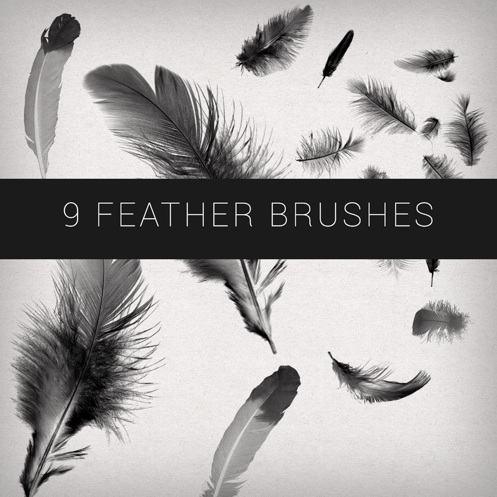 9 Feathers Brushes Photoshop brush