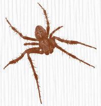 Spiders Photoshop brush