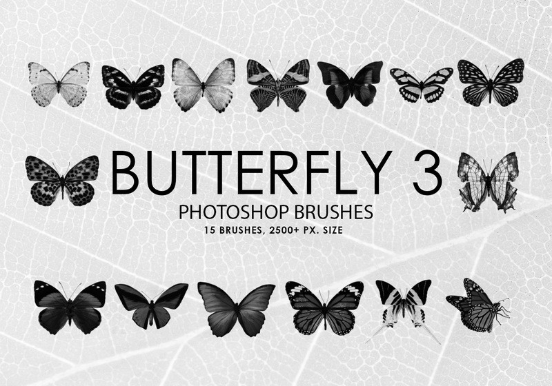 Free Butterfly Photoshop Brushes 3 Photoshop brush