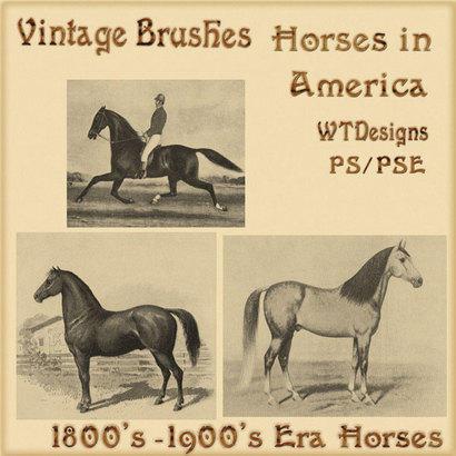 Vintage Brushes Horses in America Photoshop brush