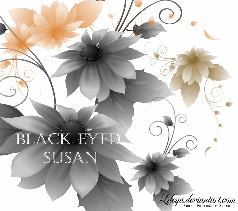 Black-Eyed Susan flower Photoshop brush