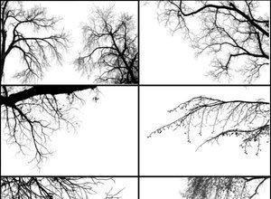 Tree Borders Photoshop brush