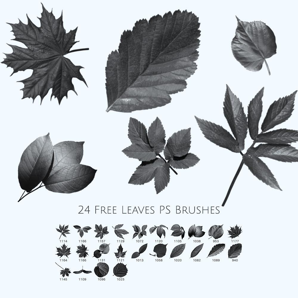 24 Free Leaves Photoshop Brushes Photoshop brush