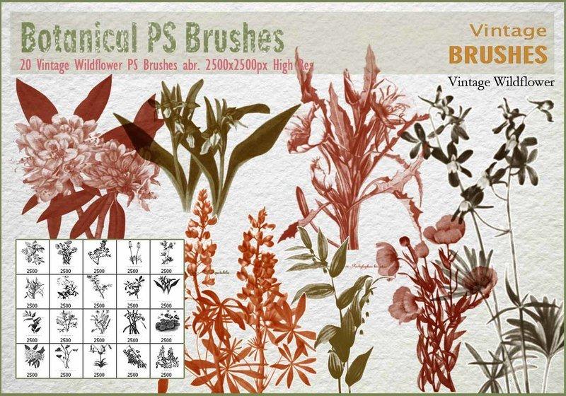 Vintage Wildflower PS Brushes  Photoshop brush