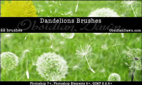 Dandelions Photoshop Brushes Photoshop brush