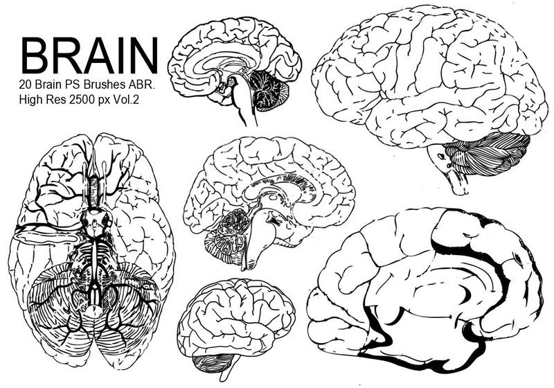 20 Brain PS Brushes ABR.Vol.2 Photoshop brush