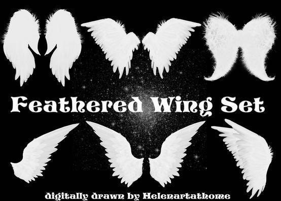 Feathered Wing Set Photoshop brush