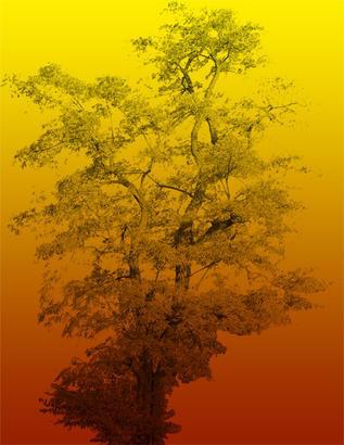 Large Tree Brush Photoshop brush