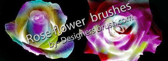 Rose flower brushes Photoshop brush
