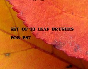 Leaf Brushes Photoshop brush