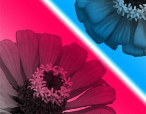 Summer Flower Brush Set Photoshop brush