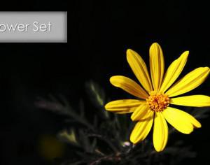 Flower Set Volume 2 Photoshop brush