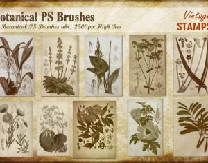 Vintage Botanical PS Brushes abr. Photoshop brush