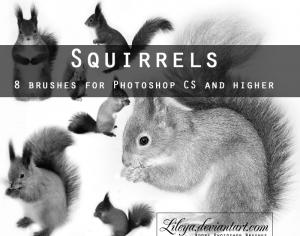 Squirrels Brushes Photoshop brush