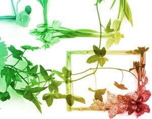 Flower Frames Photoshop brush