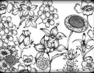Hand Drawn Flowers Free Brush Pack Photoshop brush