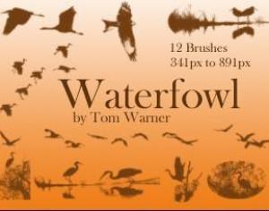 Waterfowl Photoshop brush