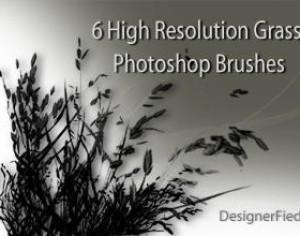 6 High Resolution Grass Brushes Photoshop brush