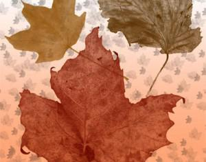 Fall Leaves Brush Pack Photoshop brush