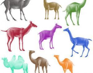 Camel Brushes Photoshop brush