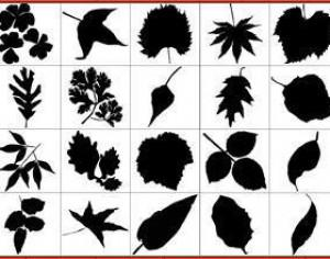 Leaf Silhouettes Free Brush Pack Photoshop brush