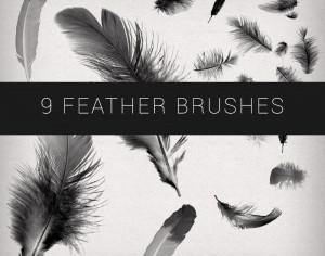 9 Feathers Brushes Photoshop brush