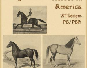 Vintage Brushes Horses in America Photoshop brush