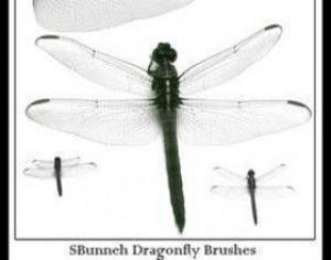 Dragonfly Brush Photoshop brush