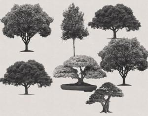 7 Free Trees PS Brushes Photoshop brush