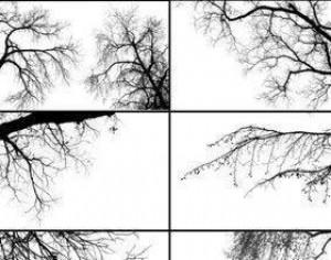 Tree Borders Photoshop brush
