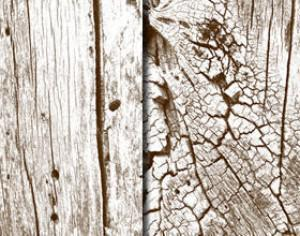 Free High Res Wooden Textures Photoshop brush